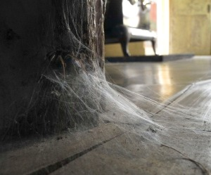 8-spider-and-web-at-basement-door
