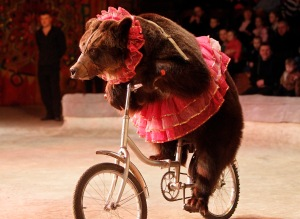 A bear rides a bicycle