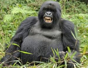 Funny_Gorilla