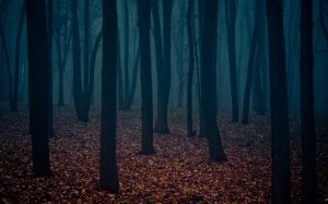 Forest-At-Night-21