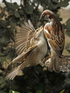 swamp-sparrow-clipart-birdie-17