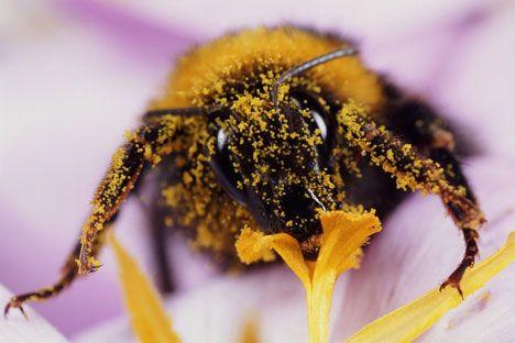 pollen-helps-allergies-2