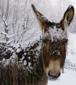 34cc2c733bc2a3e3ae378c98205f6b87--mini-horses-winter-solstice
