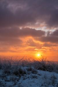 winter_cold_vinter_frost_rime_rimfrost_kallt_skateholm-452377.jpg!d